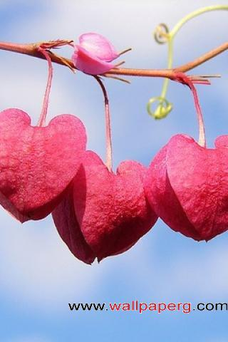 Heart shaped flowers ,wide,wallpapers,images,pictute,photos