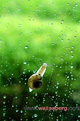 Snails to climb ,wide,wallpapers,images,pictute,photos