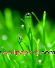 Green grass ,wide,wallpapers,images,pictute,photos