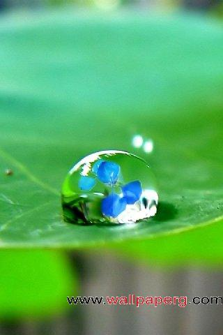 Dew in the blue ,wide,wallpapers,images,pictute,photos