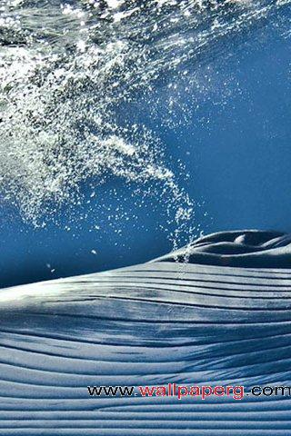 Wave drop ,wide,wallpapers,images,pictute,photos