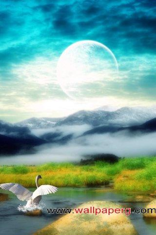 Moonlight swan ,wide,wallpapers,images,pictute,photos