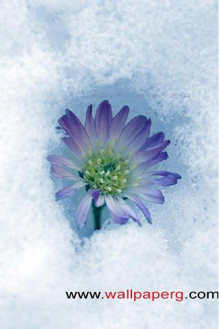 Snow flower