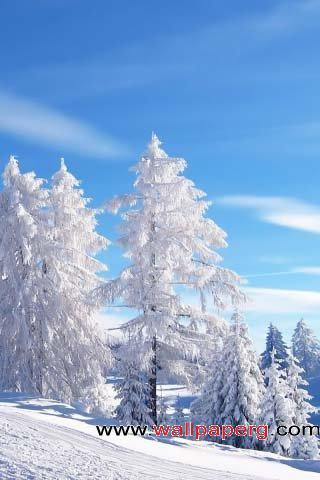 Snow trees ,wide,wallpapers,images,pictute,photos