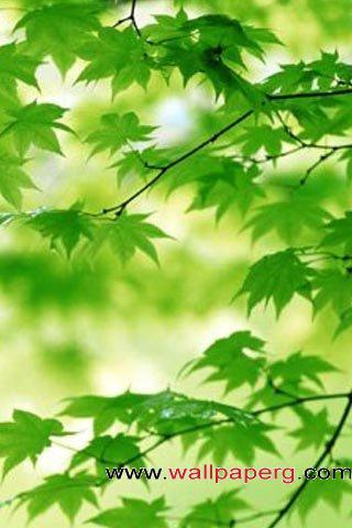 A green ,wide,wallpapers,images,pictute,photos