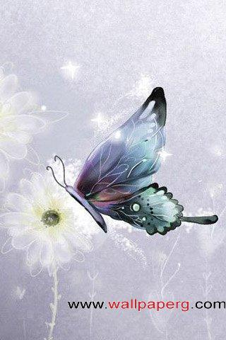 Butterfly ,wide,wallpapers,images,pictute,photos