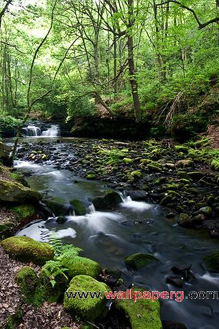 Forest stream ,wide,wallpapers,images,pictute,photos