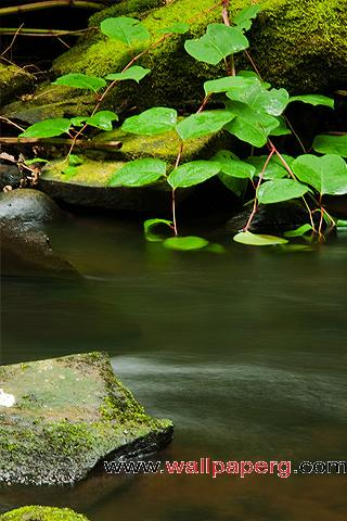 Calm stream ,wide,wallpapers,images,pictute,photos