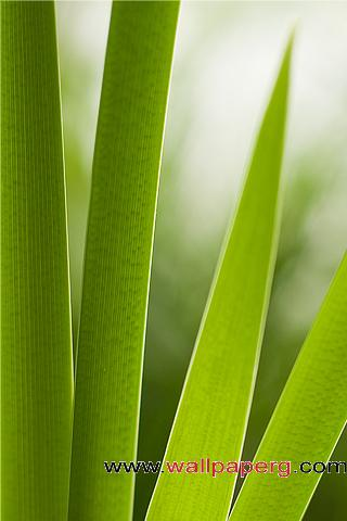 Blades of grass ,wide,wallpapers,images,pictute,photos
