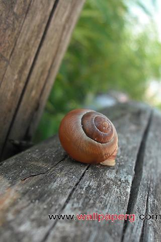 Abandoned snail ,wide,wallpapers,images,pictute,photos