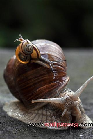 Little snails ,wide,wallpapers,images,pictute,photos