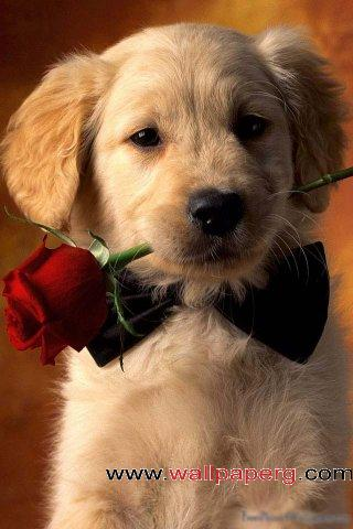 Red rose puppy