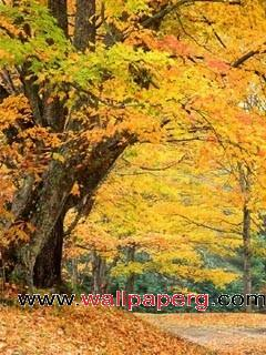 Nice hd autumn leaves