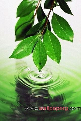 Splash of green ,wide,wallpapers,images,pictute,photos
