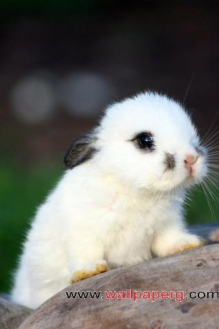 Little bunny ,wide,wallpapers,images,pictute,photos