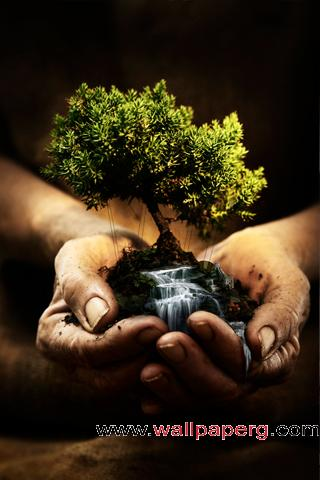 Tiny bonsai ,wide,wallpapers,images,pictute,photos
