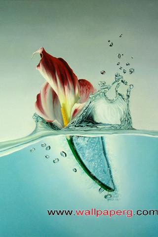 Water flower ,wide,wallpapers,images,pictute,photos