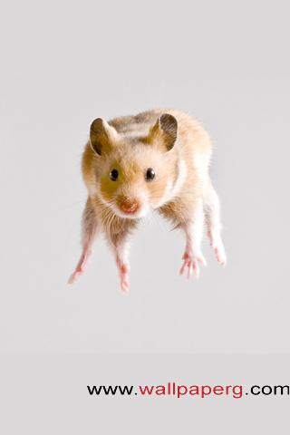 Hamster jump ,wide,wallpapers,images,pictute,photos
