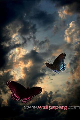 Dusk butterflies