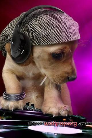 Dj puppy