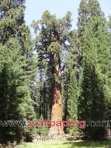 General sherman ,wide,wallpapers,images,pictute,photos