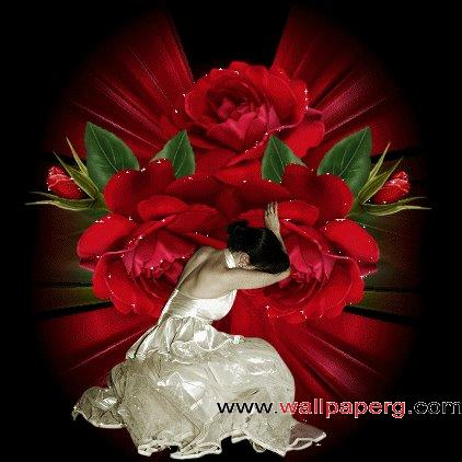 Roses ,wide,wallpapers,images,pictute,photos