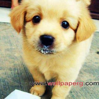 Cute puppy 01