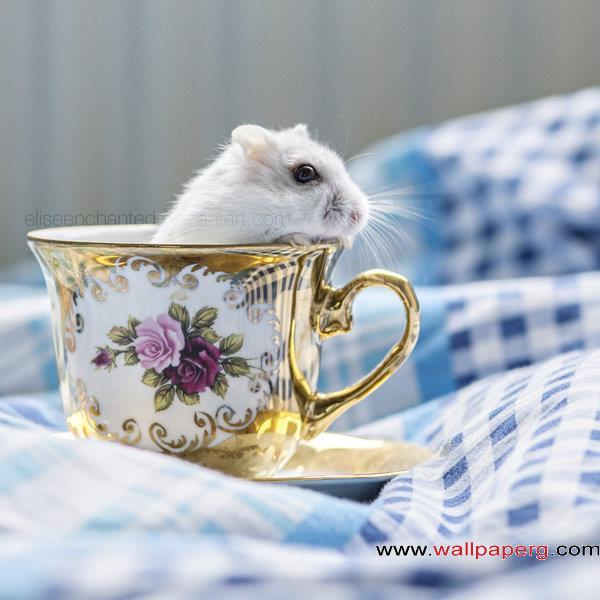 A mice in the cup