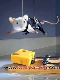 Mouse impossible ,wide,wallpapers,images,pictute,photos