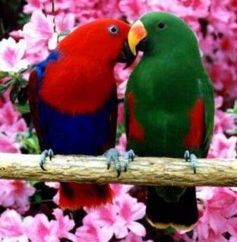 Download Love Birds Love And Emotion For Your Mobile Cell Phone