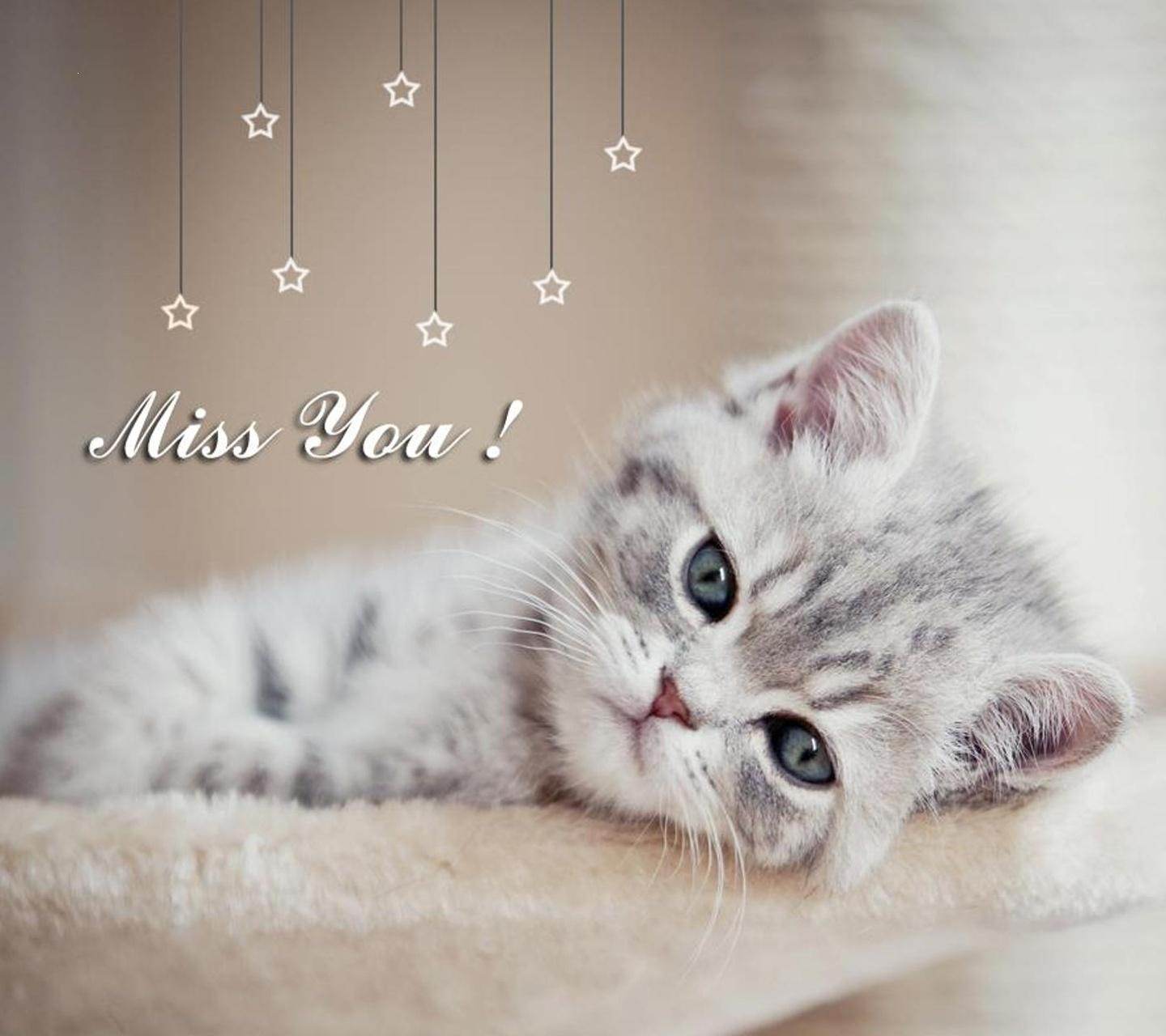 Amazing Cat Wallpaper For Your Phone - 1445068094-sweet-cat-miss-you-file  Gallery_37133 .jpg