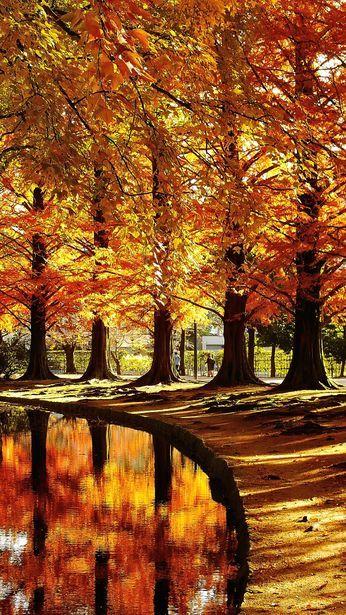 Download Autumn Okayama, Japan