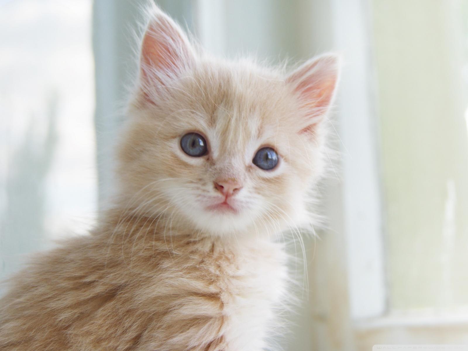 Download Cute Kitten Wallpaper