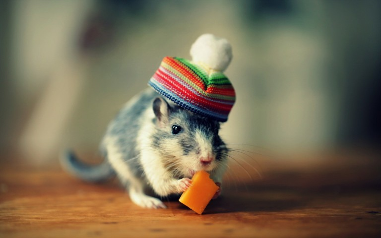 Cute Mouse Funny Image