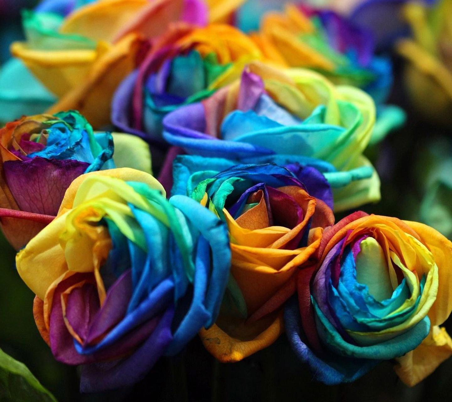 Colourful Rose Hd Wallpaper
