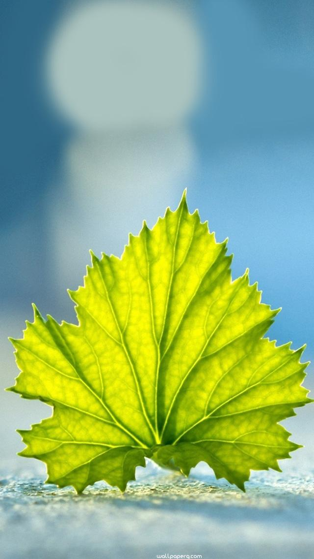 Download Leaf On The Ground Iphone 5 Wallpaper Whatsapp
