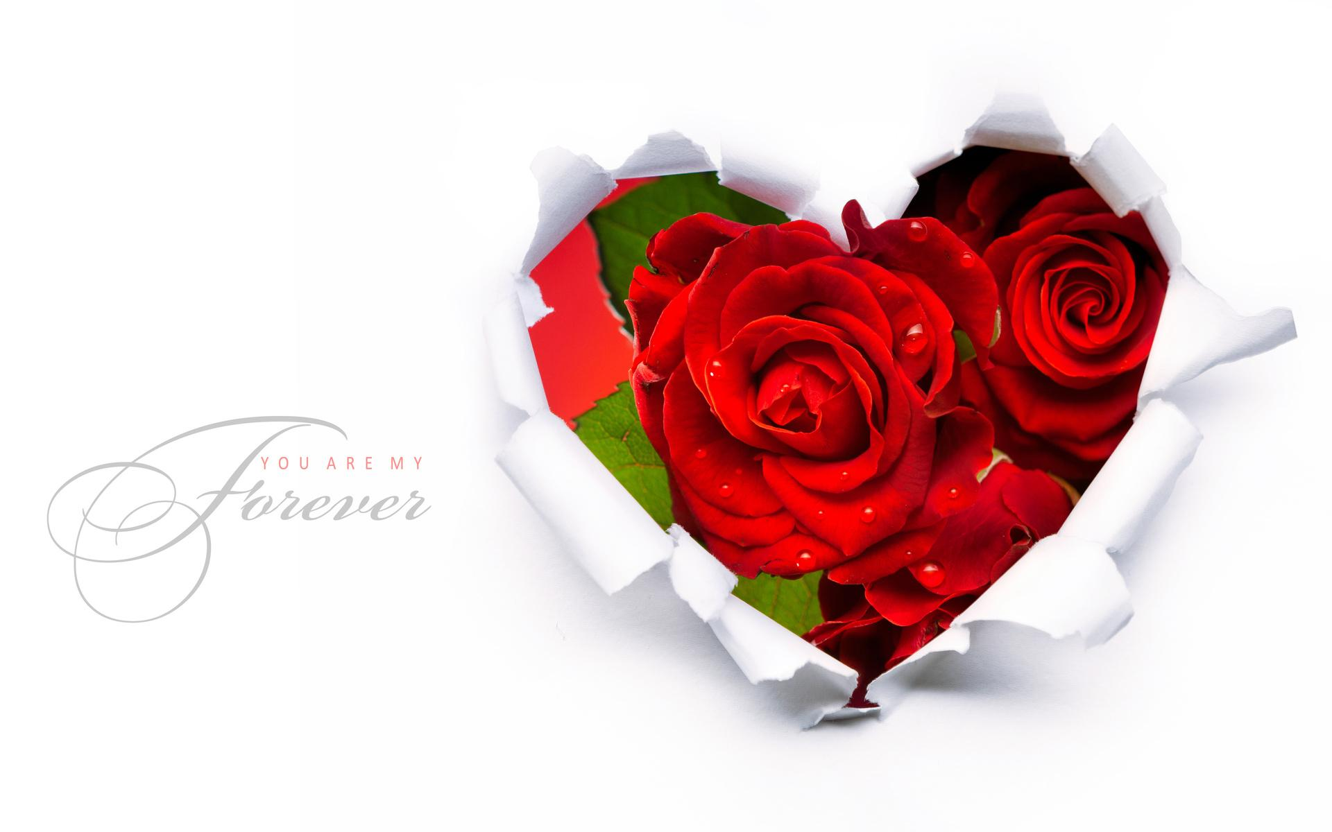 download valentines day special hd wallpaper for oppo