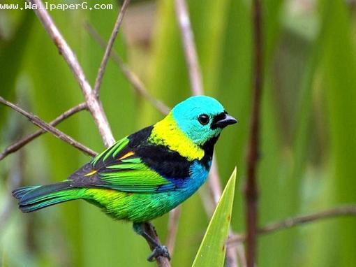 Download Colorful Bird Birds For Your Mobile Cell Phone