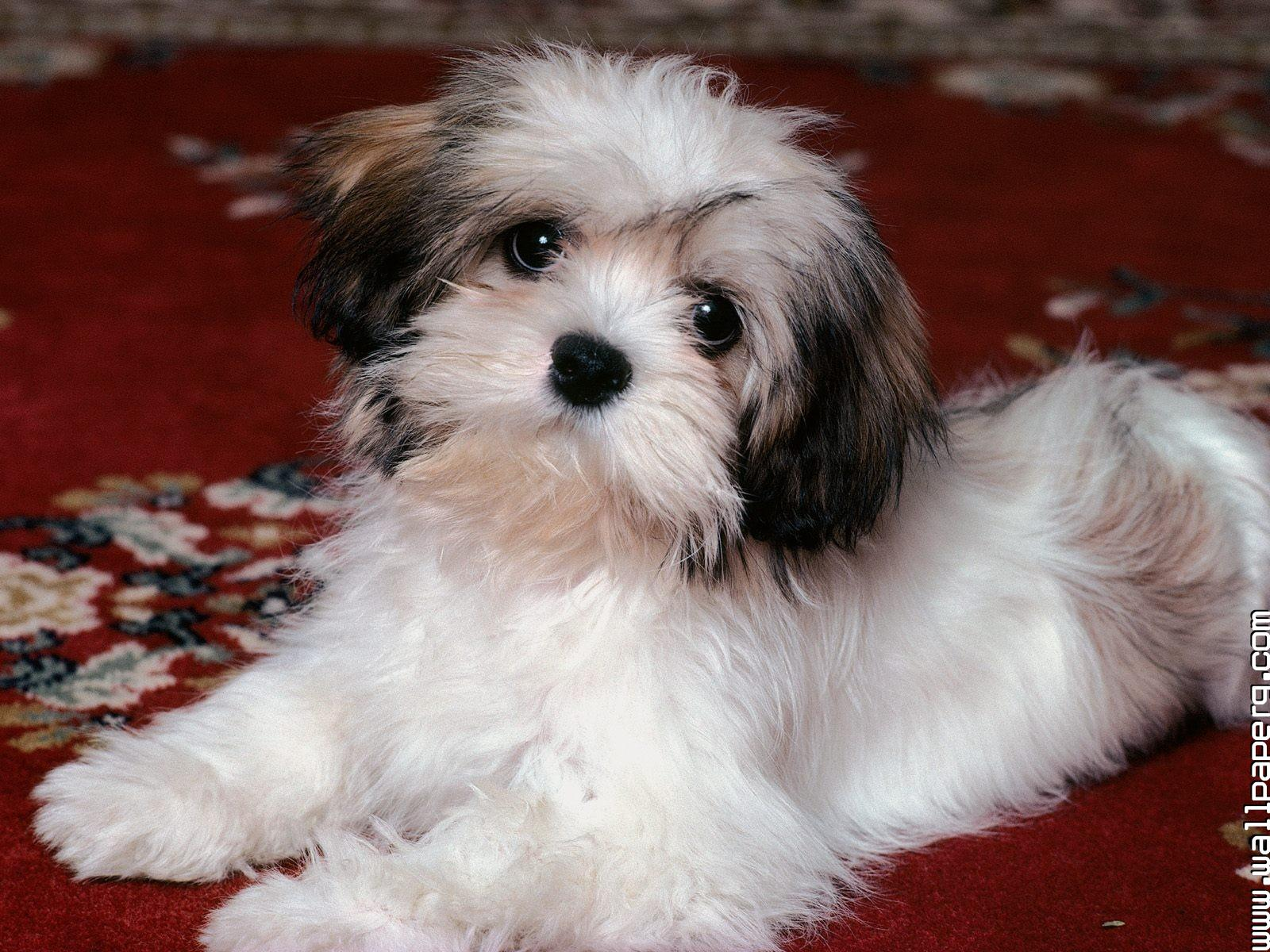 Download Dogs Pets Awesome Wallpaper Domestic Animals For Your